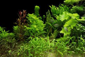 aquarium plants in sand