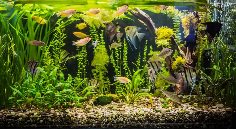 aquarium plants in gravel