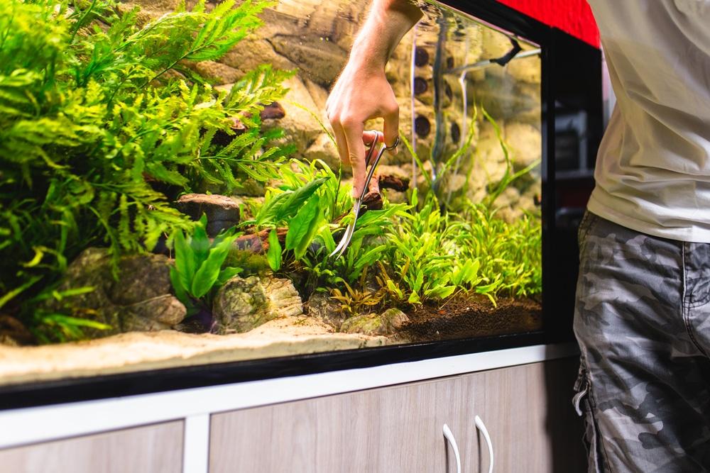 Man cleaning aquarium plants