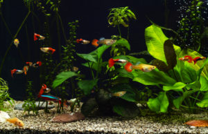 flowering aquarium plants