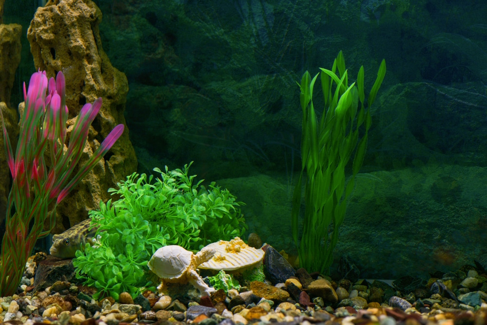 silk aquarium plants